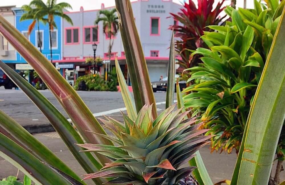 Downtown Hilo, Hawaii Island