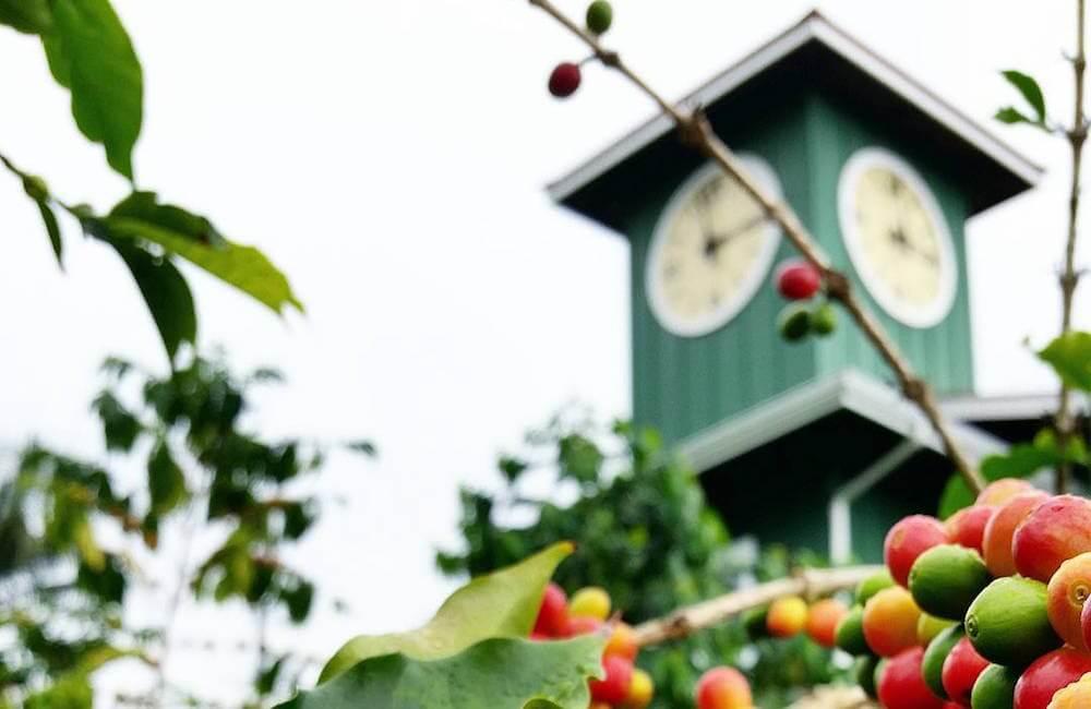 Hula Daddy Coffee Plantation, Hawaii Island Must Dos<br>📷 @crystalfoth
