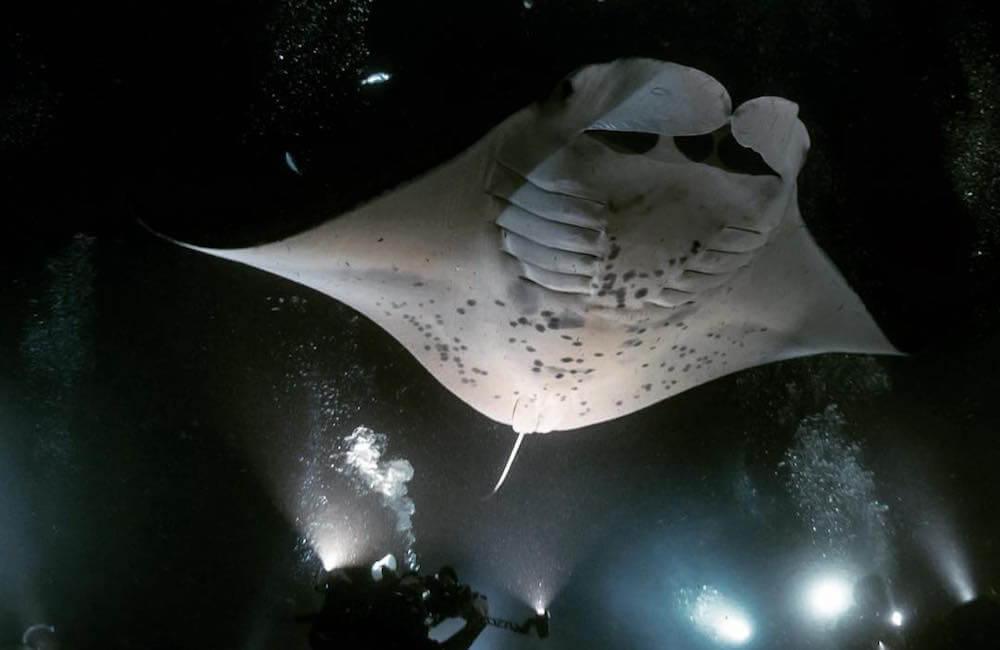 Jack's Diving Locker, Hawaii Island Must Dos