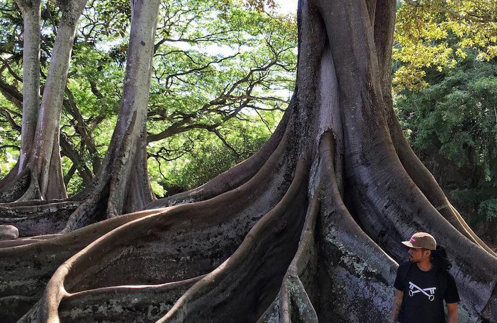 McBryde Garden, Kauai Must Dos
