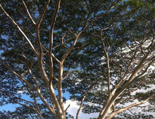 Top 10 Kauai Must Do's