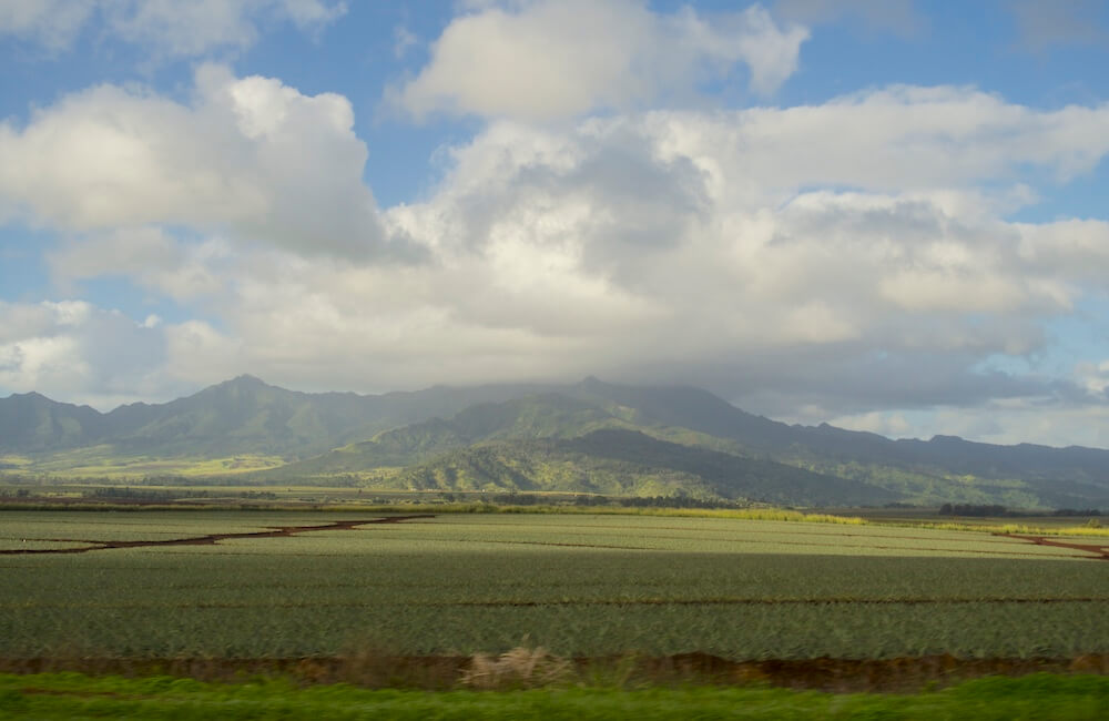 Pineapple Field, North Shore, Oahu, Hawaii